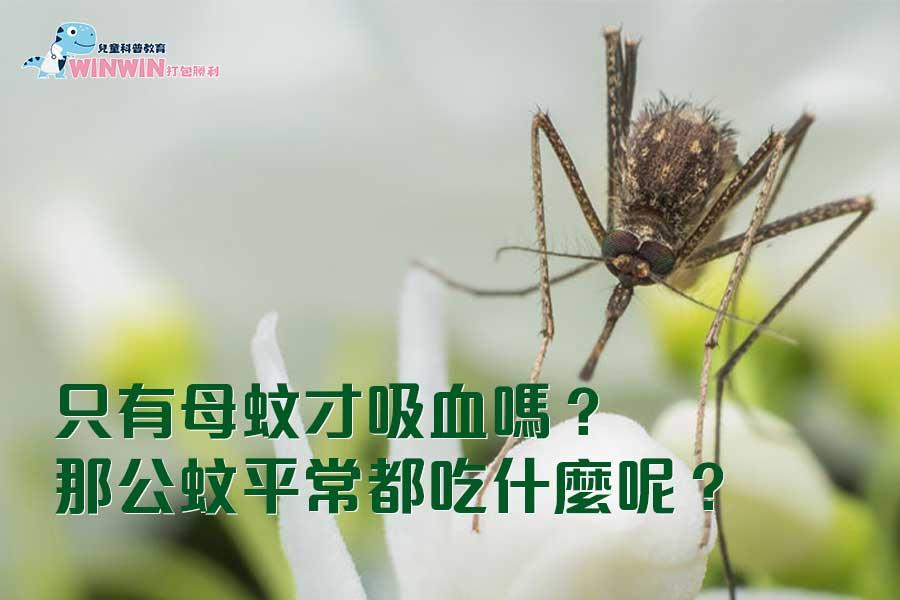 只有母蚊才吸血嗎?那公蚊平常都吃什麼呢?